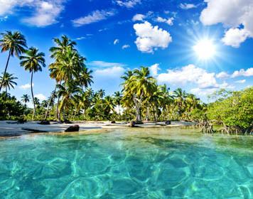Palmenstrand Südsee