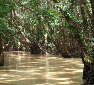 Segelportrait: Fluss im Dschungel
