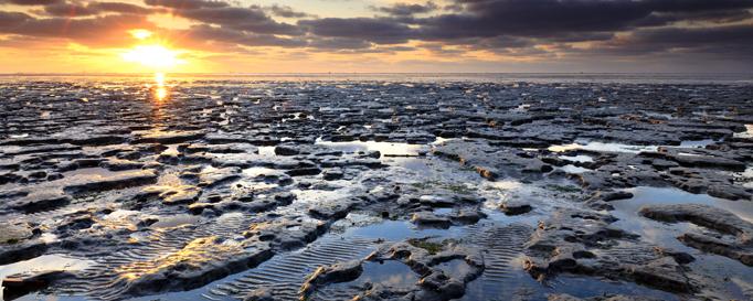 Segeln Wattenmeer: Sonnenuntergang im Watt