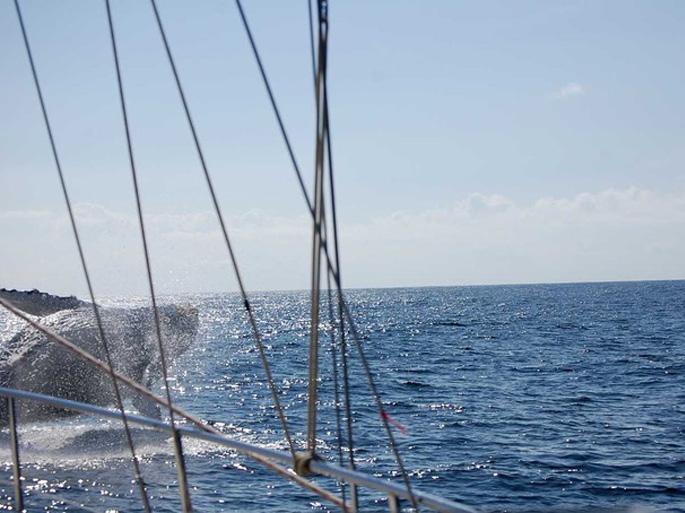 Segelblog SY Cayenne: Begegnung mit einem Wal